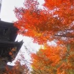The Brilliant Autumn Colors Of Kyoto Japan